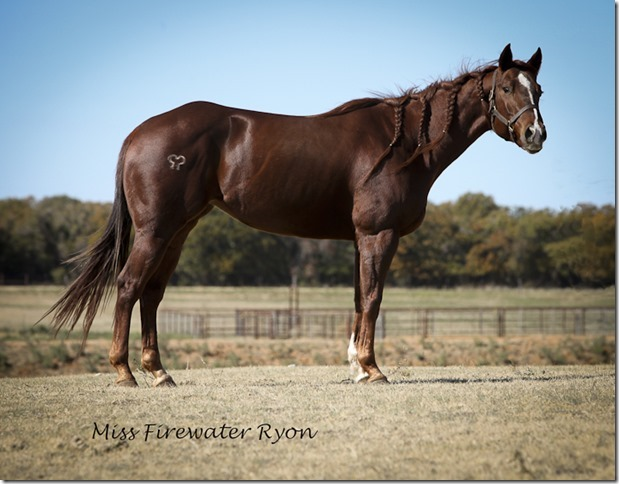 Miss Firewater Ryon  Split Bone Ranch