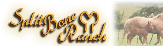 Split Bone Ranch